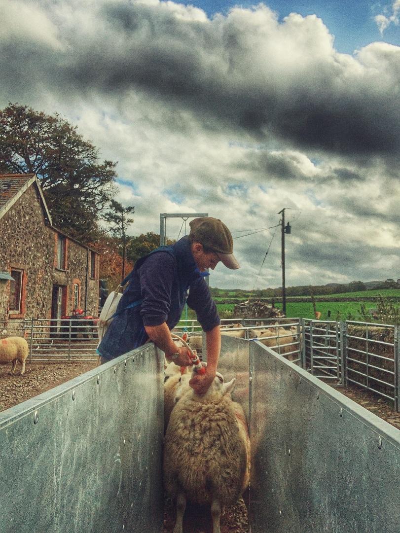 ffi_on_farming1
