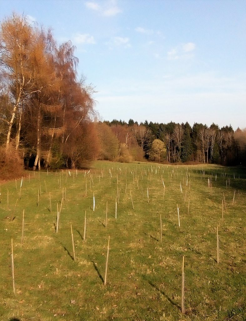 Students plant 500 trees to create 'woodland corridor' at land-based North Wales college